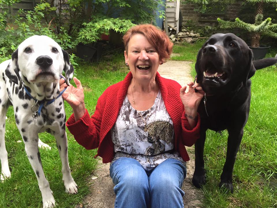 dog sitting barking mad smiling Host Iris dalmatian Labrador