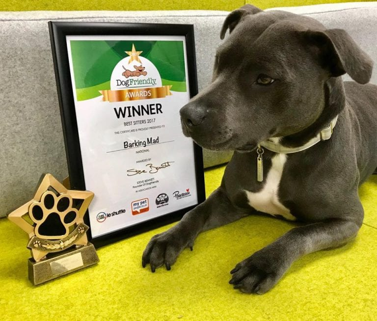 Staffie Dog Sitters Friendly Award Winners Barking Mad