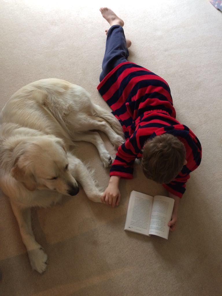 Bed time stories on a South Lakes Barking Mad dog holiday.