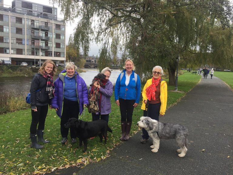 barking mad south lakes dog walk kendal exercise hosting dog boarding pet sitting