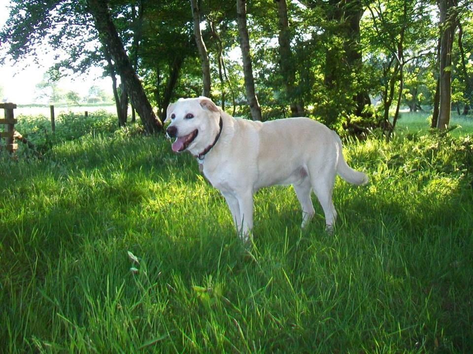 At Barking Mad Lancaster, our dog sitting customers' pets enjoy 5* rated care