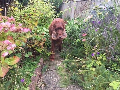 Barking Mad Durham dog sitters
