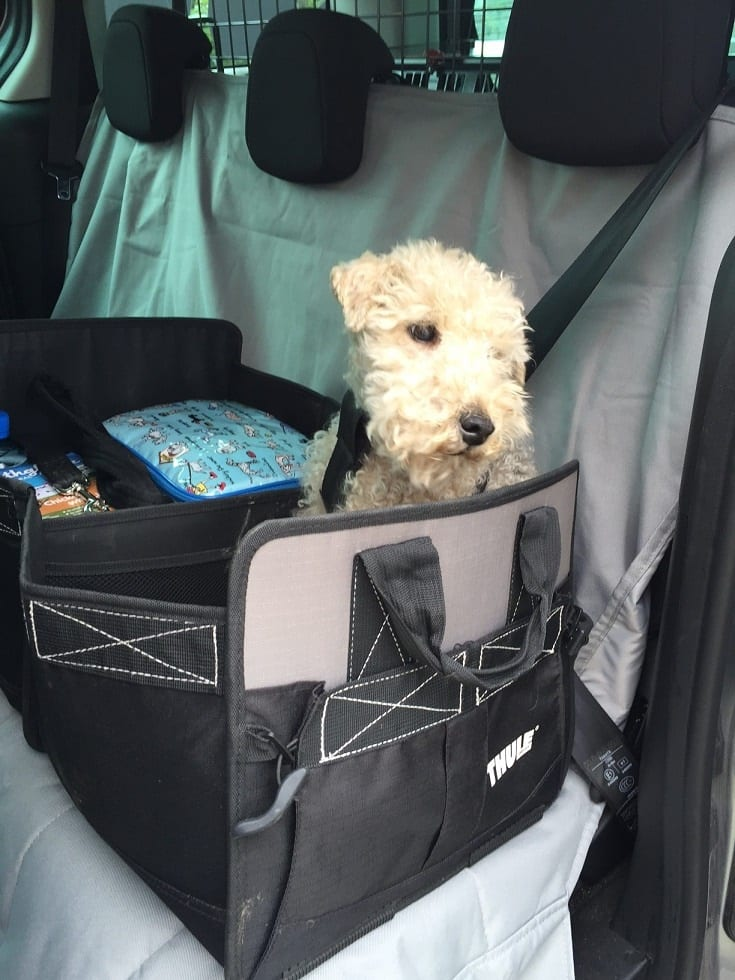 Bree is a front or back seat pet carrier girl with Barking Mad South Lakes