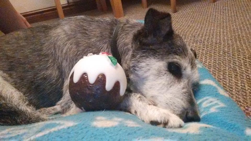 Barking Mad Lancaster dog sitters provide cosy winter dog holidays