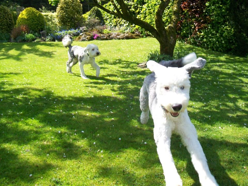 Barking Mad Lancashire provide one to one dog sitting