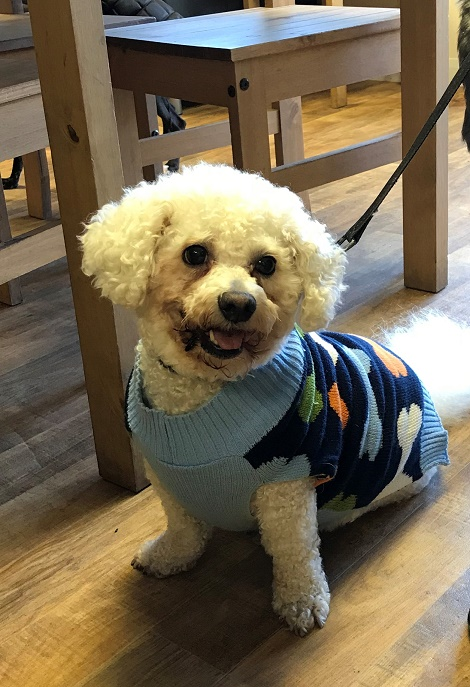 Harvey barking mad durham dog sitting home boarding