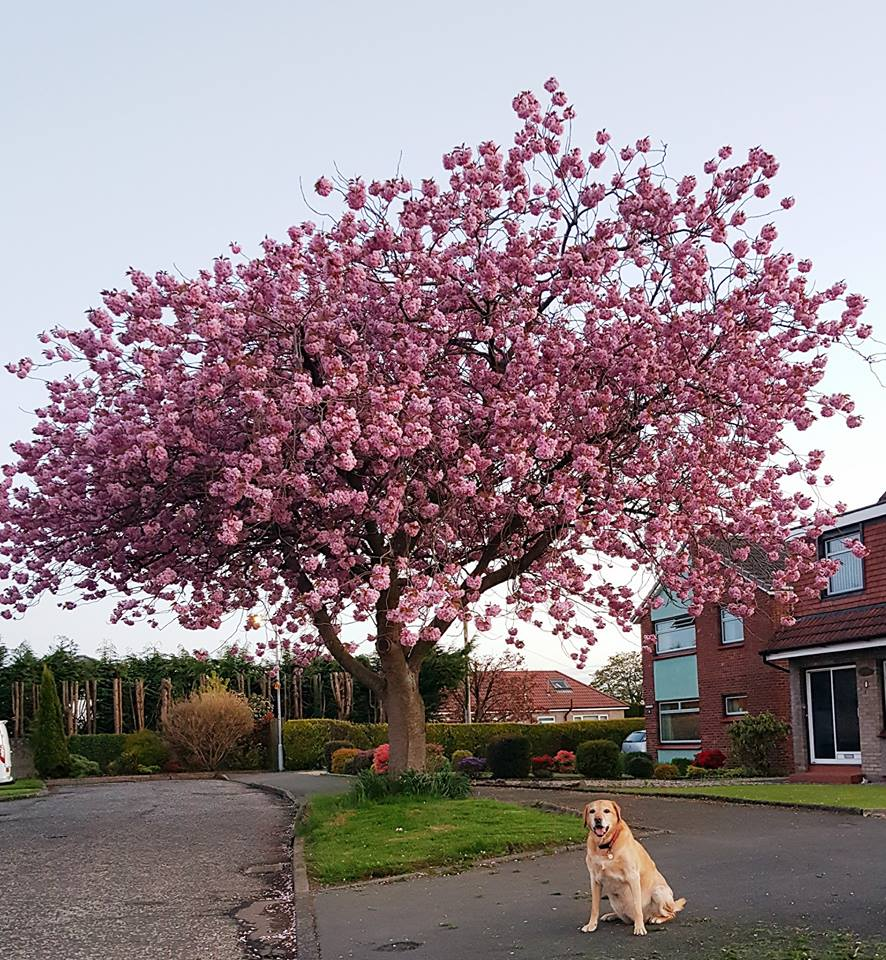 Honey showing off her favourite tree! for barking mad
