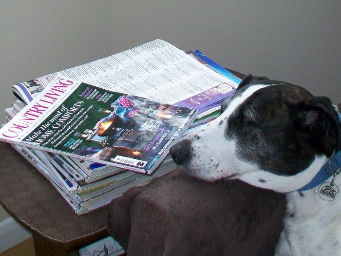 Barking Mad Lancaster dog home boarding service