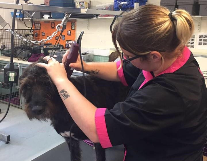 Kayleigh making Cilla look beautiful in her grooming parlour