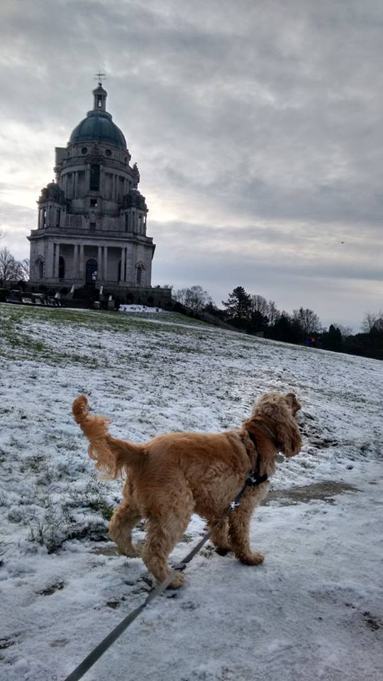 Barking Mad Lancaster offer a dog sitting service with local walks