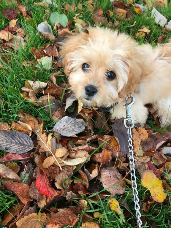 Puppy On An Autumn Walk