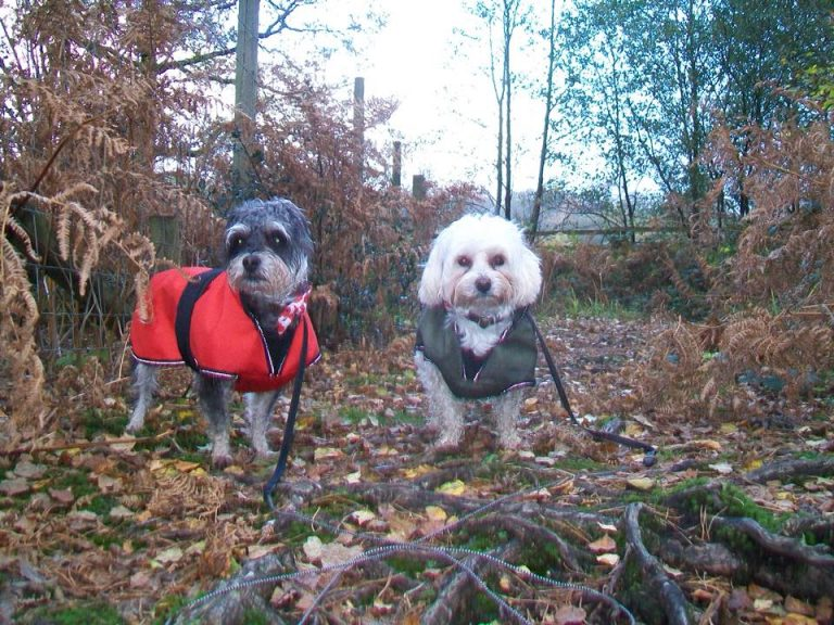 Dogs on a woodland walk whilst staying with Lancaster and Morecambe dog sitters