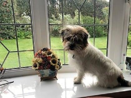 Barking Mad Norfolk dog host dog sitting servce, home boarding