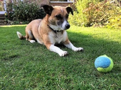 barking mad dog holiday in Norfolk home from home dog sitting service