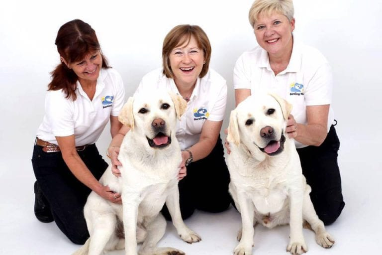 Barking Mad Dog Sitting Team With Two Labradors