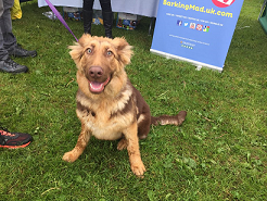 brown dog at our dogs for good event