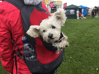 poodle in a backpack very cute picture at the barking mad stall dogs for good event