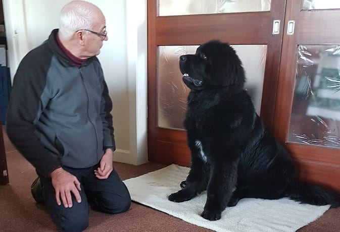 Barking Mad Fife host David and Harry the Newfoundland pup