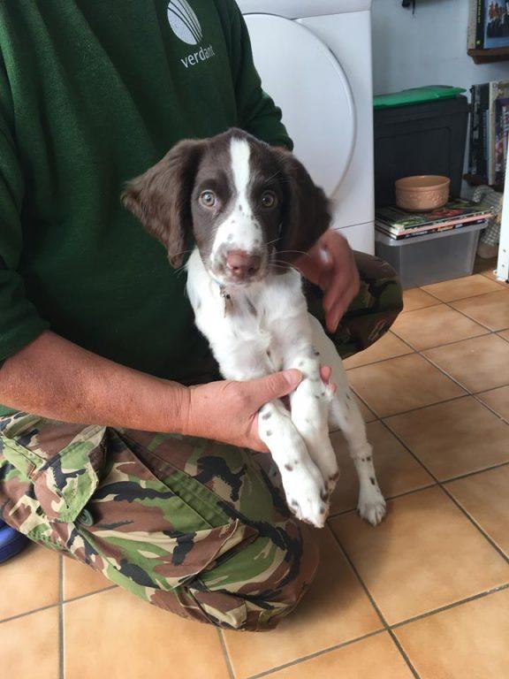 Doris Dog sitting Chichester Barking mad home boarding jane harrison