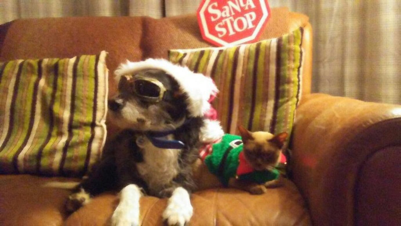 barking mad christmas picture dog home from home care.