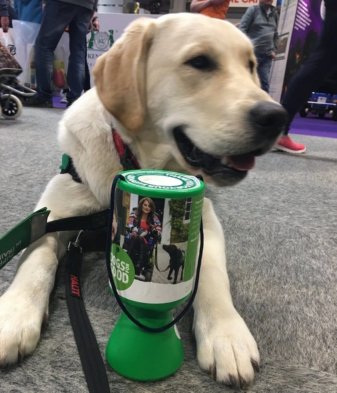 dogs for good assistance dog for barking mad