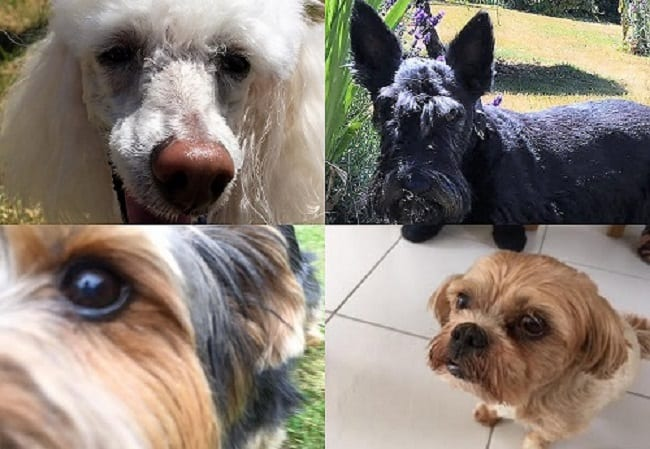 Some of our top dog additions to Barking Mad Banbury. Clockwise this is Teddy the Toy Poodle, Bobby, Eddie and Nugget.