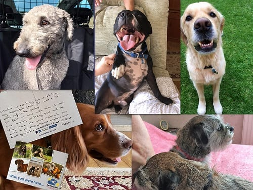 The latest members of our Barking Mad Banbury family. From top left clockwise, this is Yogi, Luther, Jessie, Boo & Bramble and Charlie.