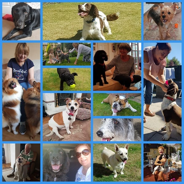 Just a few of our summer doggy guests!