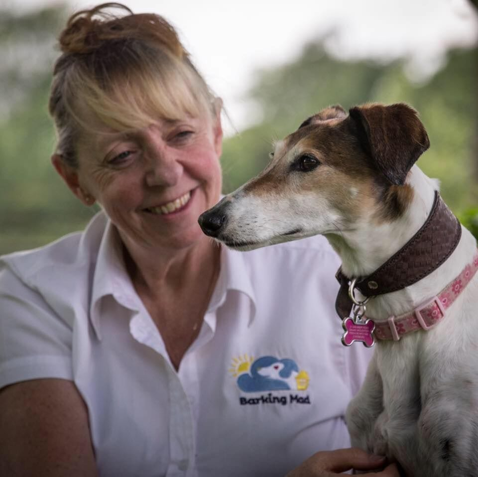 Barking Mad dog sitters provide loving one to one care