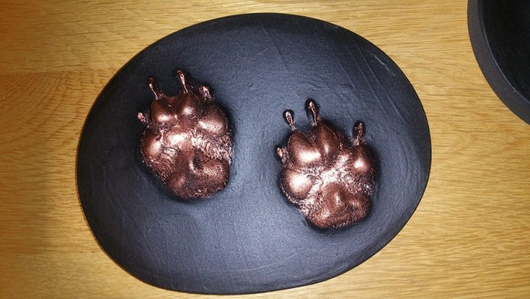 3d Paw Print Barking Mad Dog Sitting Service Home Boarding Newcastle