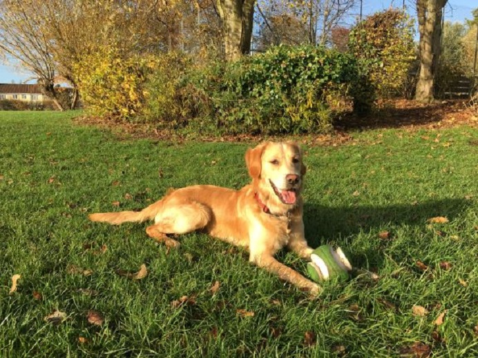 Barking Mad Bristol Home boarding dog sitting john johnson Barney Loves To Play Ball Too