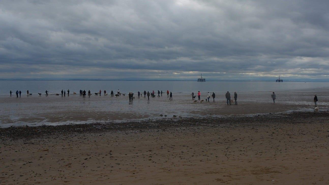 Dogs from across Fife enjoy a run on Leven Beach