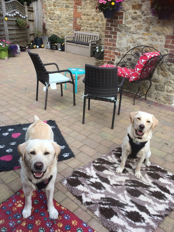 Leo And Boone Barking Mad Dog Sitting Home Boarding Cotswolds