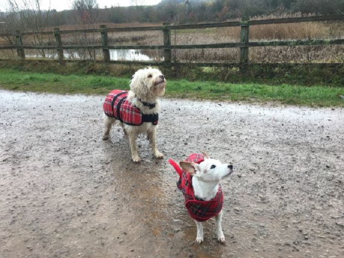 Matching Coats! Barking Mad Dog sitting home boarding North Bristol John Johnson holiday for dogs
