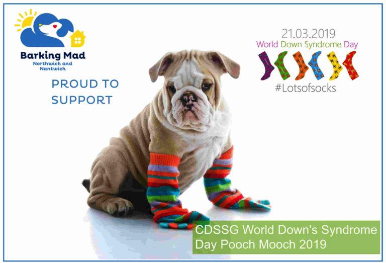 Poochmooch2019