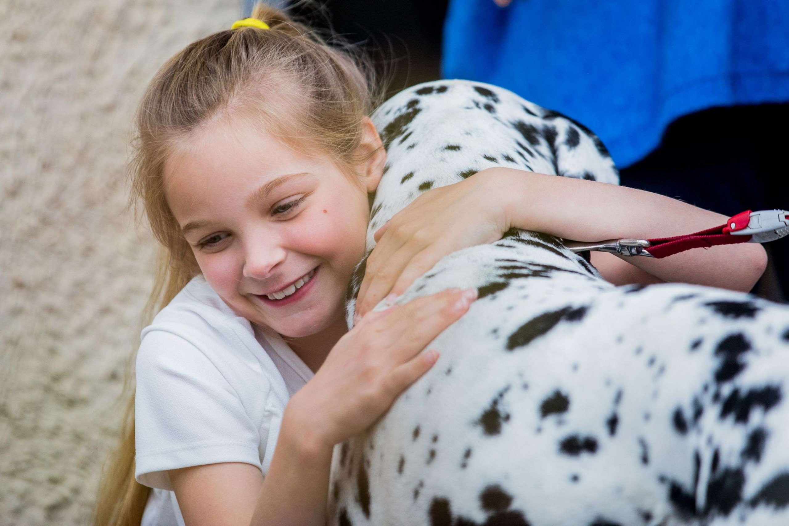 Barking Mad Dog Sitting Elsie May host home boarding cuddle at door dalmation Lottie