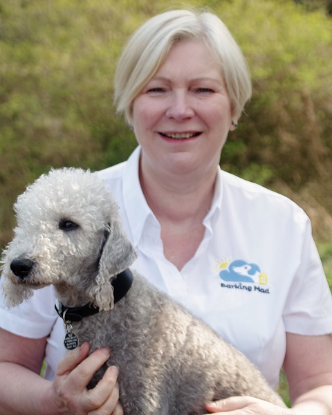 Carrie Jarvis Barking Mad Dog Sitter Home Boarding Tyne Valley Web