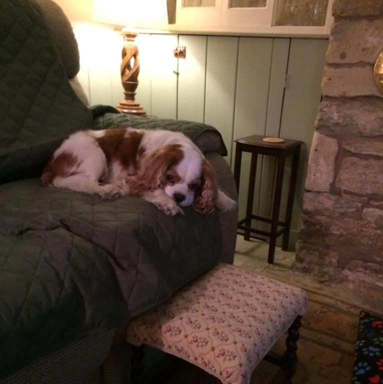Barking Mad dog sitting home boarding chester cavalier kin charles spaniel