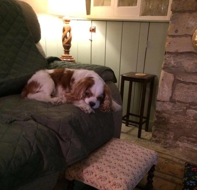 Chester The Cavalier King Charles Spaniel In His Favourite Comfy Spot On Host Carole's Sofa! Barking Mad Oxfordshire dog sitting home boarding holiday