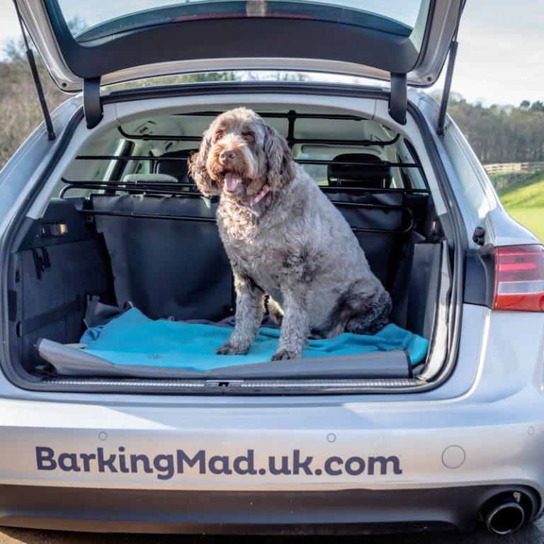 Dog In Car Barking Mad Nottingham