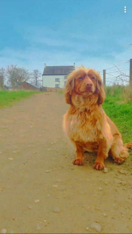 Maddie At Byrom Wood Barking Mad Dog Sitting Home Boarding Wigan Sam Evans