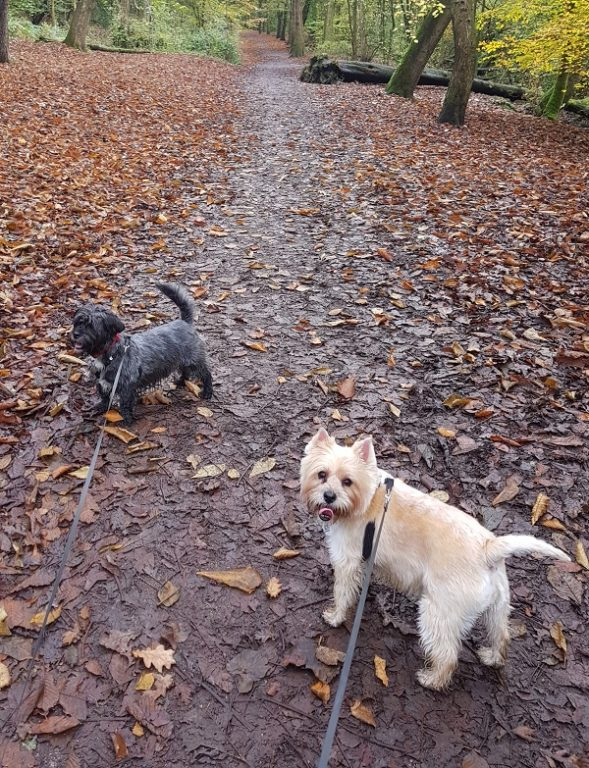 Mollie Milo Borsdane Wood Barking Mad Dog Sitting Home Boarding Wigan Sam Evans