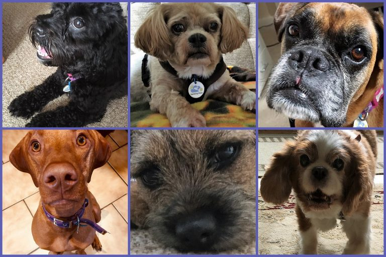 3.A montage of just some of the pooches our dog sitters have enjoyed on a Barking Mad Banbury holiday.