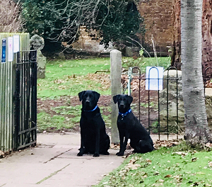 Bella And Ollie Barking Mad dog Sitting Home Boarding Stratford Upon Avon Colette Crawley host family
