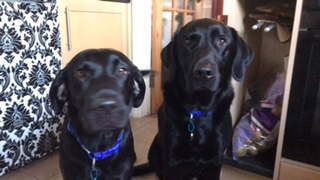 Bella And Ollie Posing For A Photo. v