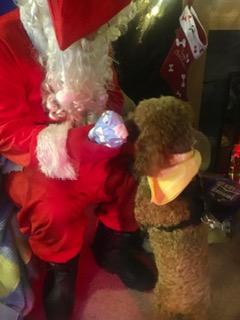 Photo 6 Dogs Trust Santa Paws Pressie