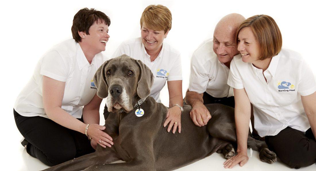 Brad Team Great Dane Dog Sitting Business Franchise Pet Care