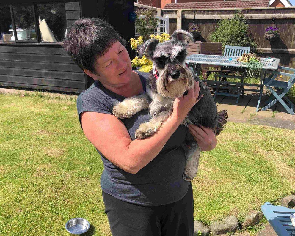 Dog Sitter Host Garden Barking Mad Mini Schnauzer Summer
