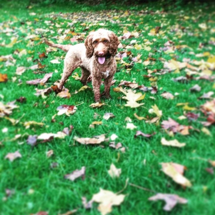 Autumnal Nellie