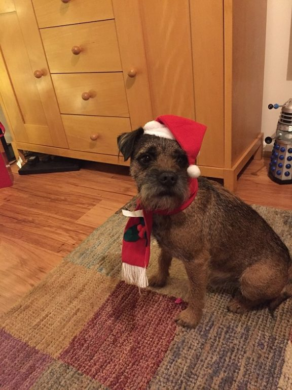 Barking Mad Christmas Dog Bob Home Boarding South Norwich